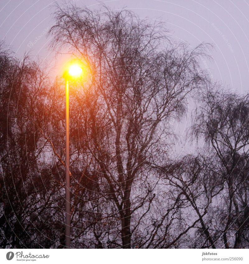 Tree Plant Autumn Dark Cold Environment Brown Lighting Energy Esthetic Safety Street lighting
