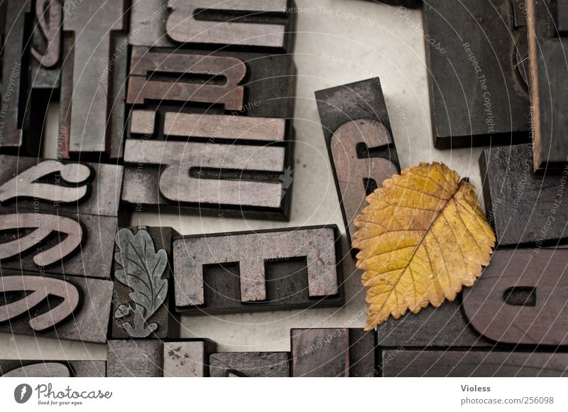 domino Technology Stamp Sign Characters Black Design letter Text Punctuation mark Pressure gutenberg printing process Leaf Rachis Autumn Colour photo Close-up