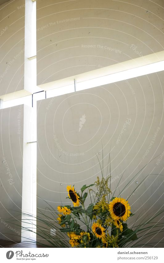 Window Wall (building) Religion and faith Wall (barrier) Interior design Modern Church Sign Crucifix Bouquet Sunflower