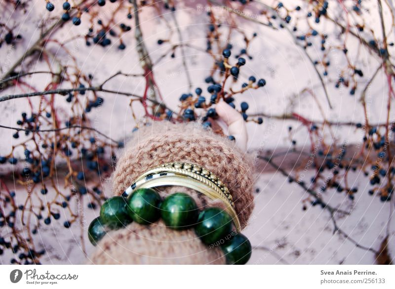 antique pink(3) Masculine Arm Hand Fingers 1 Human being Branch Twig Berries Wall (barrier) Wall (building) Facade Fashion Cardigan Accessory Jewellery Bracelet