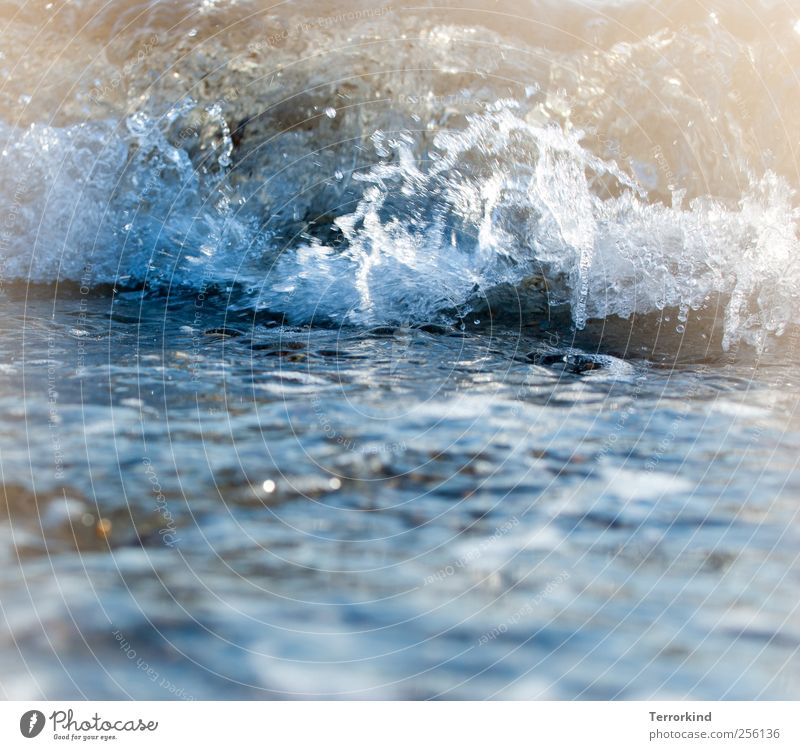 Water Ocean Summer Autumn Cold Waves Wet Swimming & Bathing To fall Baltic Sea Destruction Refreshment Foam Roll Refrigeration Snap