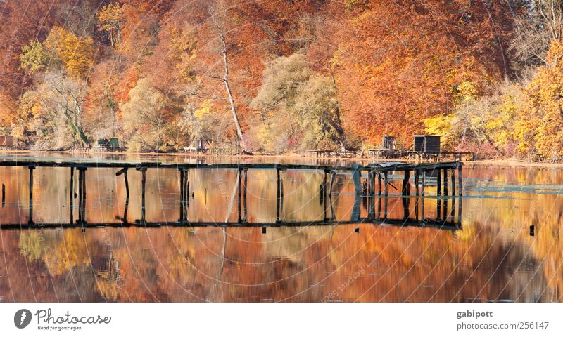Nature Water Tree Plant Sun Leaf Forest Autumn Life Environment Landscape Lanes & trails Coast Lake Brown Gold
