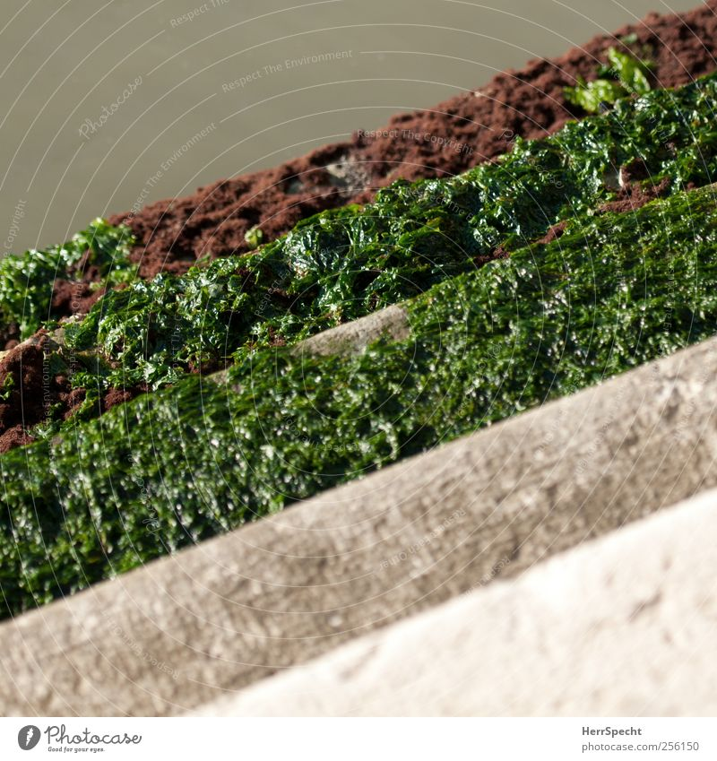 Slippery when wet Water Foliage plant Algae River bank Stairs Green Channel Access Smoothness Natural growth Colour photo Exterior shot Copy Space top