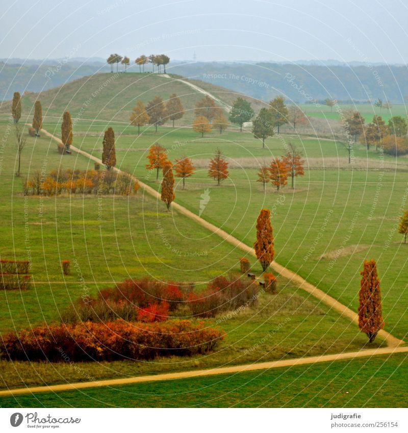 Nature Tree Autumn Meadow Environment Landscape Lanes & trails Park Bushes Hill Hannover