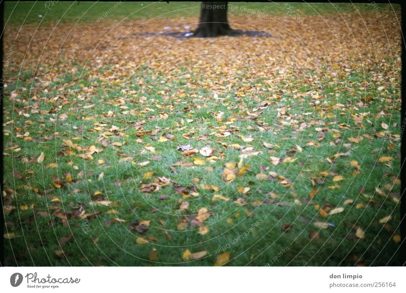 autumn Environment Nature Autumn Plant Tree Grass Leaf Foliage plant Park Meadow Lie To dry up Many Green Moody Analog Tree trunk Colour photo Exterior shot