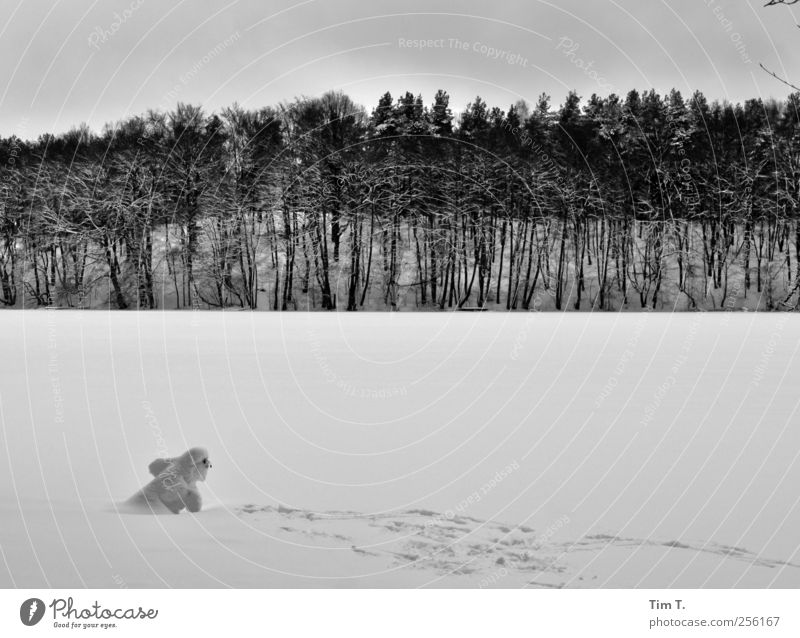 SNOWMAN Winter Ice Frost Snow Tree Lakeside liepnitzsee Joy Snowman Frozen Forest Black & white photo Exterior shot Evening