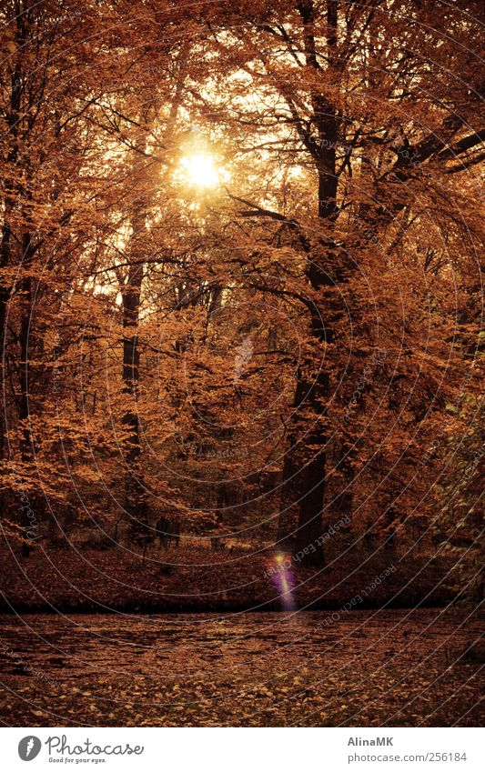 Golden Time Human being Masculine Man Adults 1 Nature Sunlight Autumn Beautiful weather Tree Leaf Park Forest Brook Idyll To go for a walk Colour photo