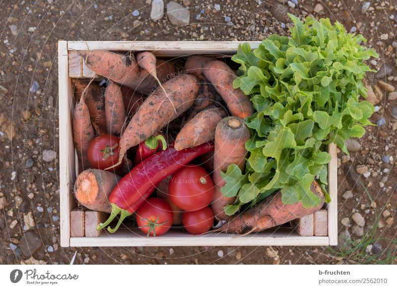 vegetable box Food Vegetable Lettuce Salad Nutrition Organic produce Vegetarian diet Agriculture Forestry Box Container Select Fresh Healthy Carrot Tomato