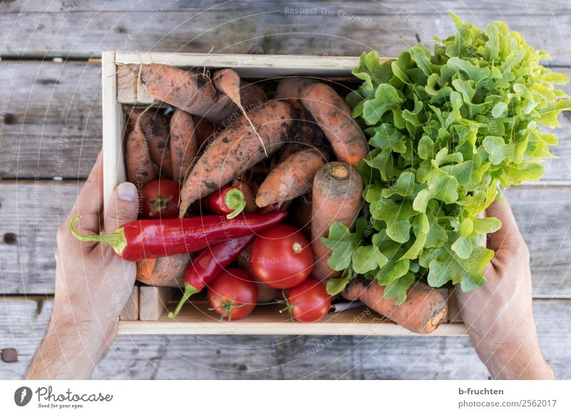 A box full of vegetables Food Vegetable Lettuce Salad Organic produce Vegetarian diet Healthy Eating Hand Fingers Box Work and employment Select Utilize