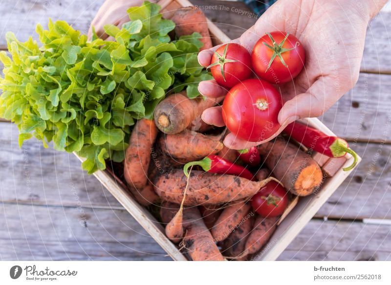 Man Healthy Eating Hand Adults Food Work and employment Fresh To enjoy Fingers Touch To hold on Vegetable Farm Harvest