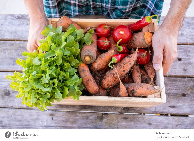 Man Healthy Eating Hand Adults Autumn Food Garden Work and employment Fresh Stand Fingers To hold on Vegetable Farm Select