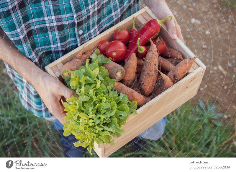 harvest-fresh vegetables Food Vegetable Lettuce Salad Organic produce Vegetarian diet Healthy Eating Agriculture Forestry Man Adults Hand Fingers 1 Human being