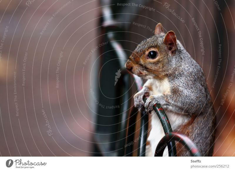 Nature Animal Eyes Gray Brown Wild animal Wait Cute To hold on Curiosity Pelt Stop Fence Animal face Watchfulness Smooth