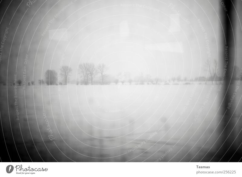fade to black Landscape Bad weather Snow Meadow Field Cold Homesickness Wanderlust Loneliness Apocalyptic sentiment Black & white photo Deserted Light Shadow