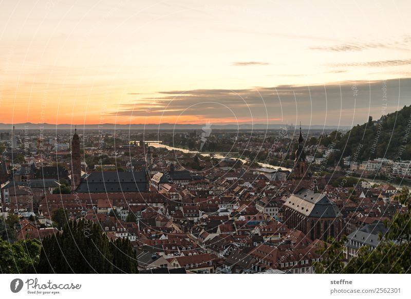 View of the old town of Heidelberg at sunset Sky Sunrise Sunset Sunlight Summer Beautiful weather Old town Church Idyll Religion and faith Neckar Colour photo