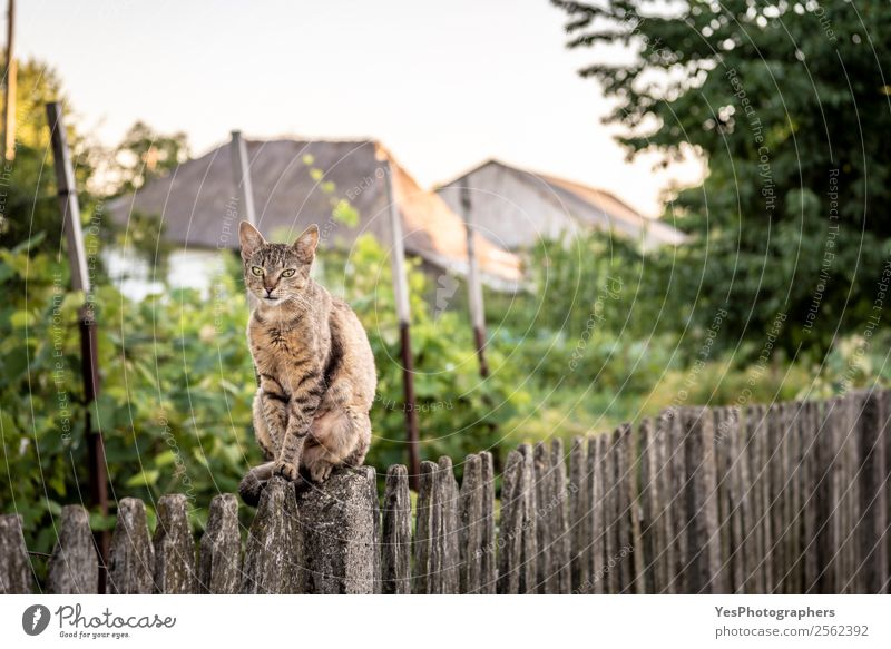 Cat sitting on a wooden fence Contentment Garden Nature Landscape Sit Cute Action agile animals Balance Strange Domestic Farm Large-scale holdings Fence