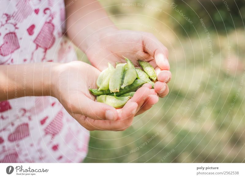 Child's hand holds sugar peas Lifestyle Healthy Eating Leisure and hobbies Vacation & Travel Toddler Girl Infancy Hand 1 - 3 years 3 - 8 years 8 - 13 years