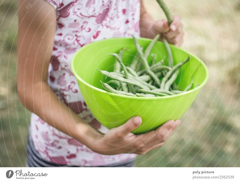 Child Nature Youth (Young adults) Healthy Eating Young woman Summer Green Sun Hand Girl Life Autumn Boy (child) Garden Playing Leisure and hobbies
