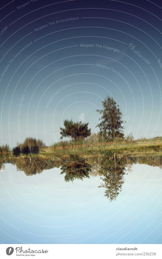 inverted world Nature Landscape Plant Water Sky Cloudless sky Beautiful weather Tree Grass Bushes Pond Lake Exceptional Blue Inverted Reflection Above Under