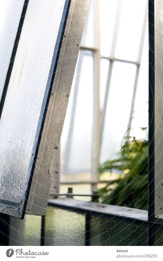 obliquely Greenhouse Window Window frame Frame Glass Metal Bright White Open Tilt Light Insight Colour photo Subdued colour Exterior shot Close-up Day Contrast