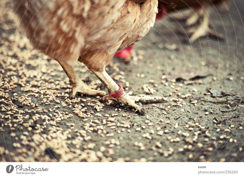 Animal Healthy Eating Brown Earth Animal foot Circle Feather Elements Agriculture Farm Organic produce Grain Animalistic To feed Organic farming Forestry