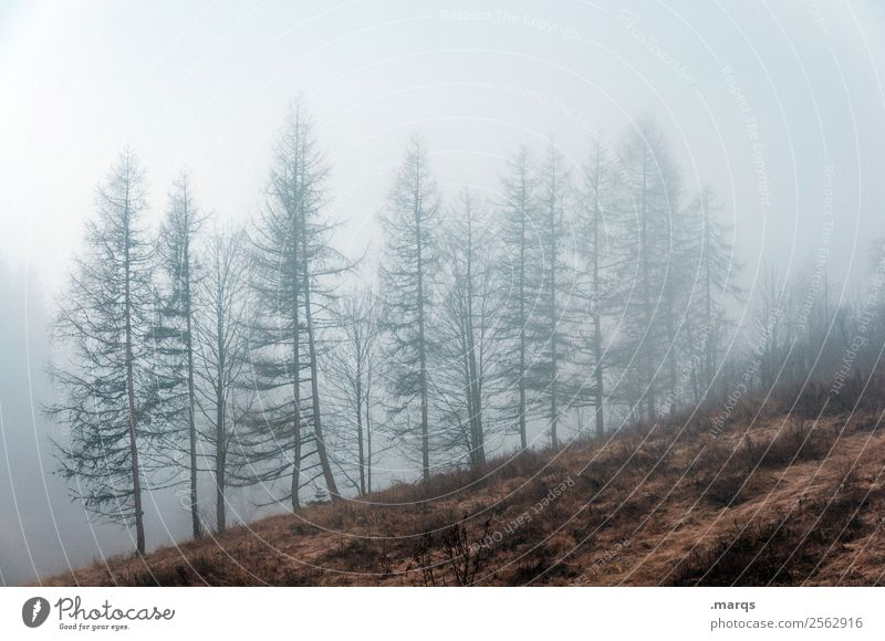 weather forecast Environment Nature Landscape Plant Air Autumn Climate Bad weather Fog Tree Meadow Dark Creepy Cold Moody Change Colour photo Exterior shot