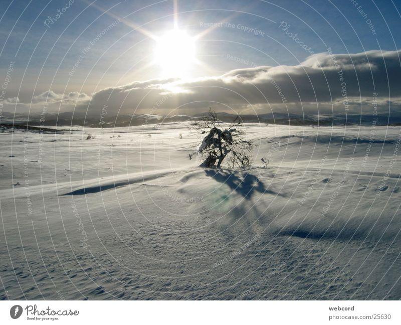 timber line Winter Ski tour Back-light Hardangervidda Norway South Norway Mountain Snow winter tours winter tents
