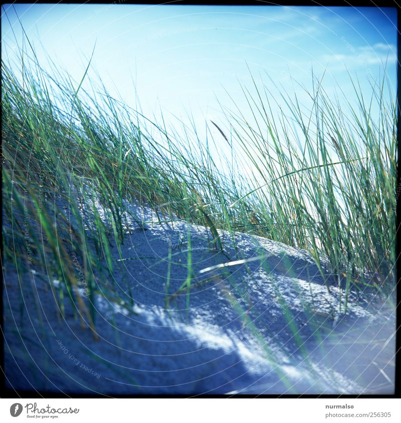 Nature Plant Sun Vacation & Travel Ocean Summer Beach Sand Coast Moody Leisure and hobbies Wind Trip Break Thin Dune
