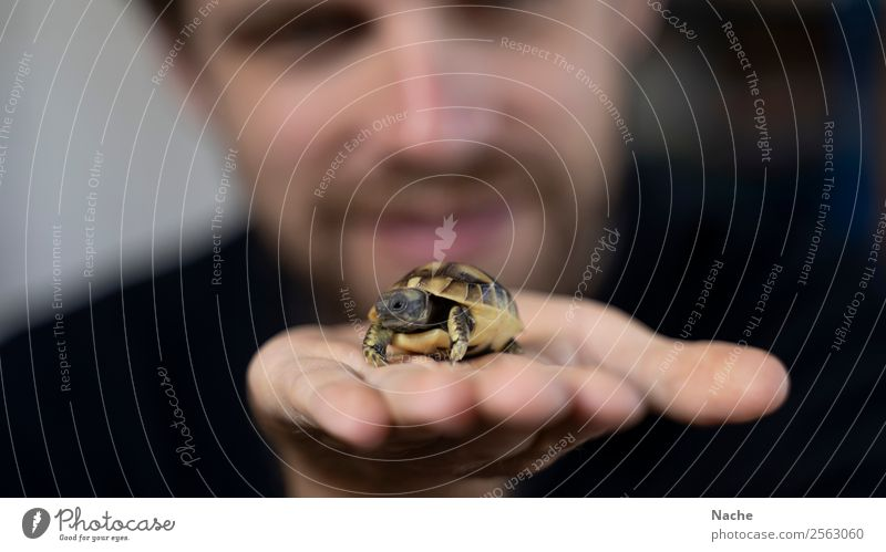 Freshly hatched Animal Pet Animal face Scales Turtle 1 Bow Shield Happy Contentment Joie de vivre (Vitality) Trust Safety Protection Safety (feeling of) Secrecy