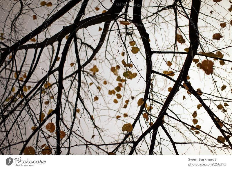 Sky Nature Tree Plant Leaf Winter Environment Yellow Cold Autumn Garden Air Park Moody Weather Climate