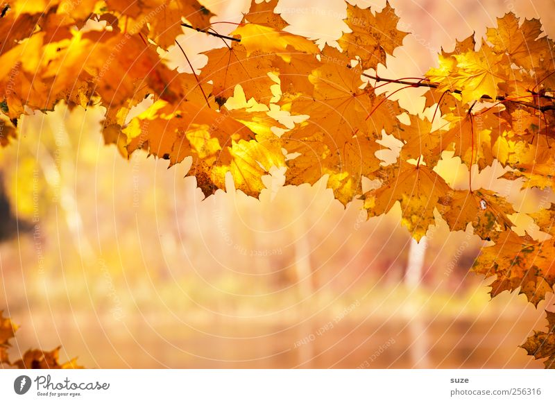 Nature Beautiful Plant Yellow Autumn Environment Landscape Warmth Lake Weather Orange Gold Natural Climate Authentic Illuminate
