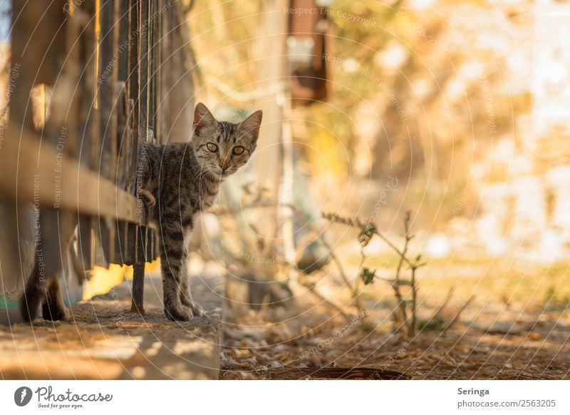 through the fence Animal Pet Cat Animal face Pelt Claw Paw Animal tracks 1 Observe Movement Playing Painting (action, work) Cat eyes Colour photo Subdued colour