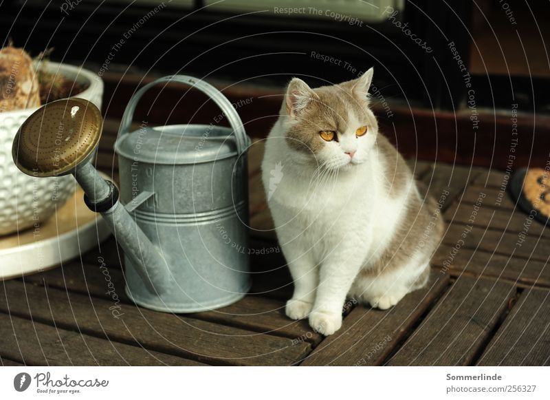 I don't care about anything. Living or residing Flat (apartment) Terrace Summer Animal Pet Cat Watering can Looking Wait Serene Calm Curiosity Interest