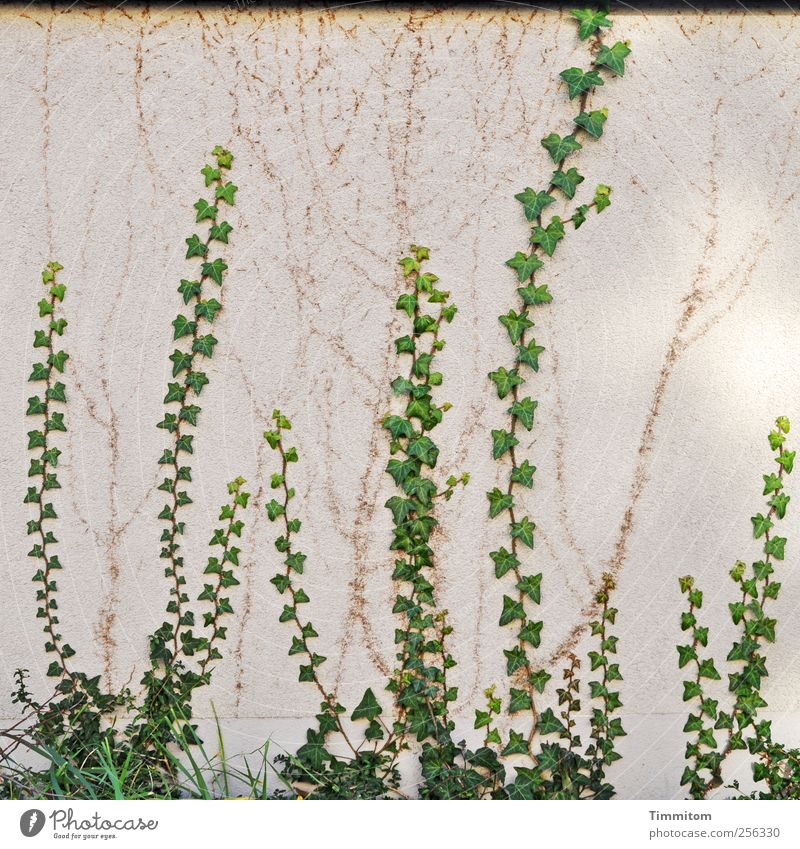 Green White Plant House (Residential Structure) Wall (building) Wall (barrier) Natural Growth Tall Esthetic Concrete Tracks Climbing Effort Ivy
