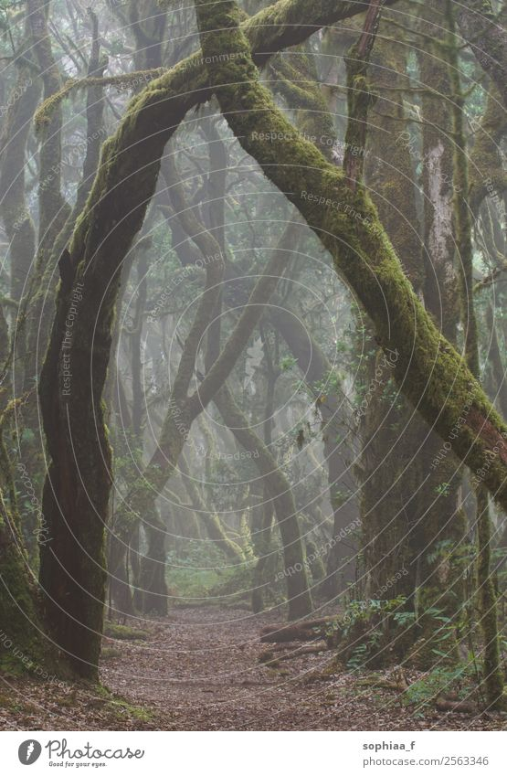 magic forest Nature Plant Bad weather Fog Tree Moss Forest Virgin forest Power Attentive Calm Hope Dream Sadness Concern Grief Death Longing Loneliness