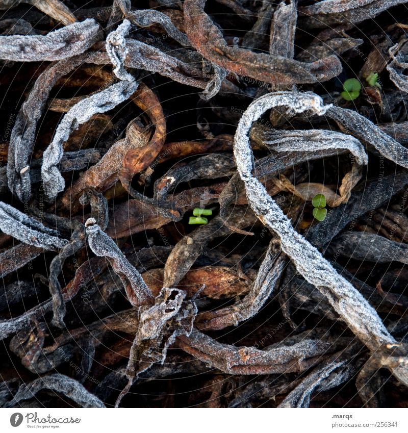 life goes on Environment Nature Winter Plant Compost Growth Cold Success Power Life Decline Past Frozen Assertiveness Colour photo Exterior shot Abstract