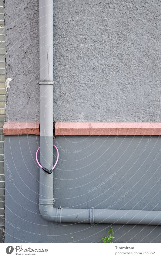 Wall (building) Emotions Gray Wall (barrier) Together Pink Concrete Esthetic Passion Hang Downtown Foliage plant Downspout Cornice