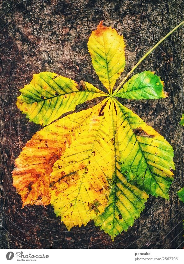 gold leaf Nature Autumn Tree Leaf Authentic Happiness Beautiful Warmth Multicoloured Yellow Gold Chestnut leaf Autumnal colours Goodbye Flashy Colour photo