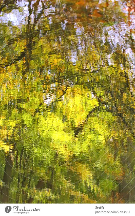 autumn impression Nature Landscape Plant Water Autumn Tree Twigs and branches Pond Autumnal landscape Beautiful Yellow Green Sense of Autumn Reflection Blur