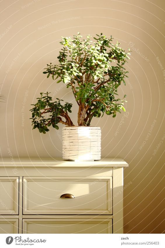 White Plant Wood Flat (apartment) Interior design Decoration Living or residing Furniture Cupboard Foliage plant Pot plant Chest of drawers