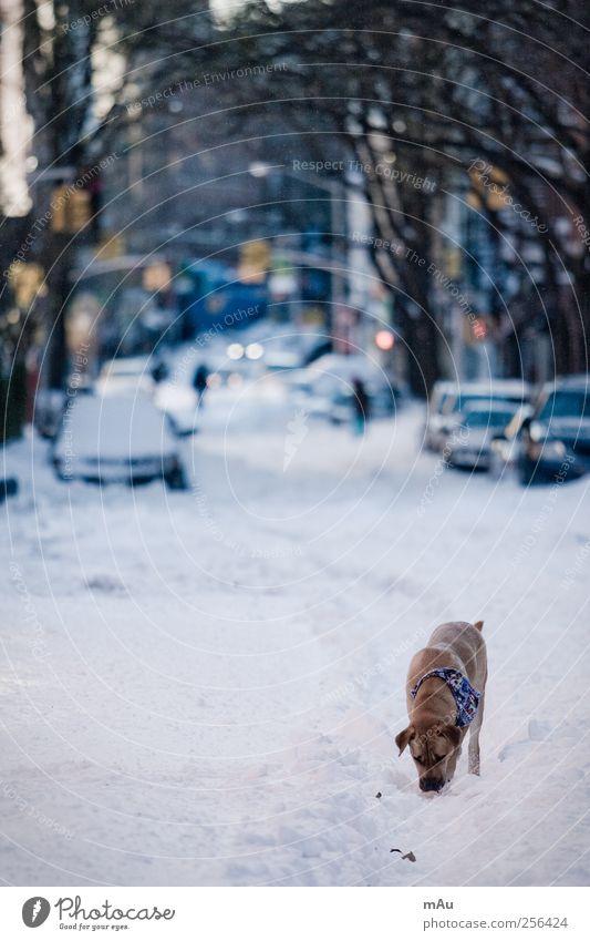 Pre-Christmas Winter Bad weather Snow Town Pedestrian Street Vehicle Car Animal Pet Dog 1 Passion Caution Serene Calm Sadness Appetite New York New York City