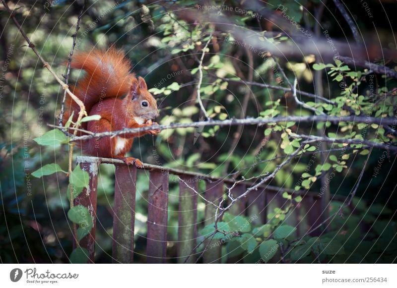 Nature Beautiful Plant Animal Meadow Environment Landscape Grass Garden Park Wild animal Cute Pelt To feed Feeding Squirrel
