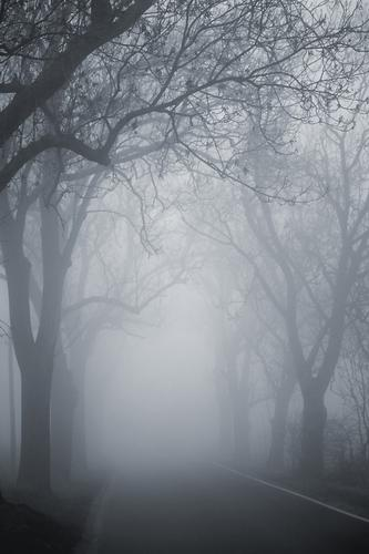 Tree Winter Autumn Street Landscape Gray Lanes & trails Weather Fear Fog Threat Branch Risk Motoring Mystic Avenue