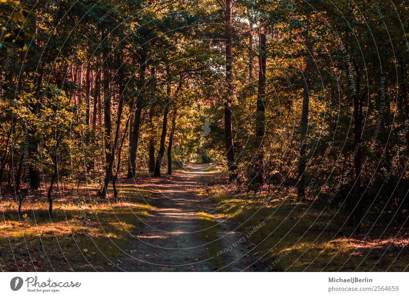 Forest path in autumnal forest Environment Nature Sunlight Autumn Tree Green Red Lanes & trails trees Hiking depth Traffic infrastructure Forwards Colour photo