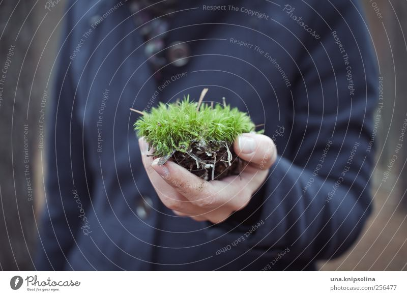 a moss animal Human being Hand Fingers 1 Plant Moss Coat To hold on Natural Soft Green Nature Environment Environmental protection Colour photo Subdued colour