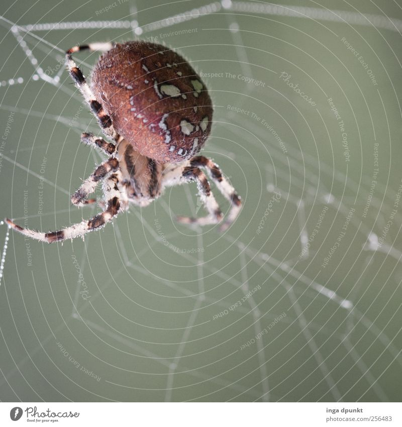 Nature Animal Autumn Life Environment Gray Garden Field Wait Wild animal Threat Might Observe Appetite Spider Willpower