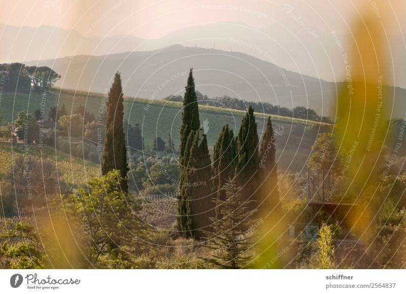 A foray through Tuscany III Environment Nature Landscape Plant Summer Beautiful weather Tree Grass Bushes Meadow Field Forest Warmth Brown Gold Green Italy