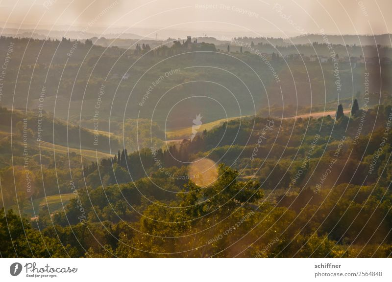 A foray through Tuscany II Environment Nature Landscape Plant Summer Beautiful weather Tree Grass Bushes Meadow Field Forest Warmth Brown Gold Green Italy