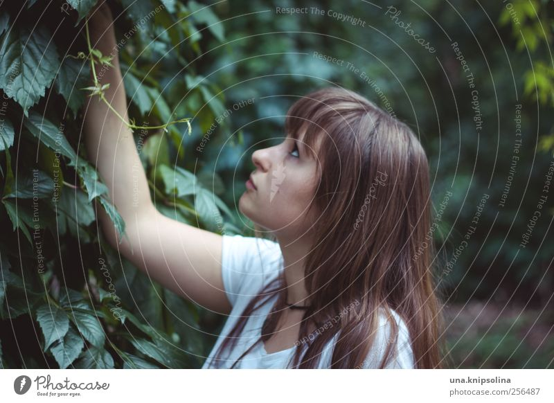 . Feminine Young woman Youth (Young adults) Woman Adults 1 Human being 18 - 30 years Plant Tree Bushes Ivy Foliage plant Brunette Long-haired Touch Think