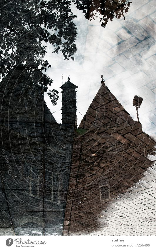 Nieuwmarkt Tree Amsterdam Downtown Old town House (Residential Structure) Dream house Facade Window Wet Puddle Reflection puddle mirroring Surrealism